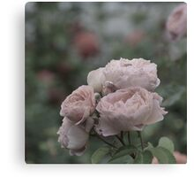 Bouquet of pale pink roses Canvas Print