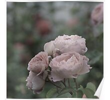 Bouquet of pale pink roses Poster