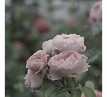 Bouquet of pale pink roses Photographic Print