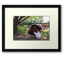 Fluffed for the Parade Framed Print