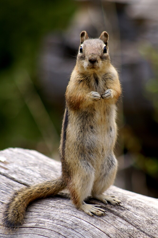 Are You Talking To Me? by Betsy  Seeton