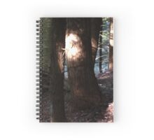 Light Playing in the Forest Spiral Notebook