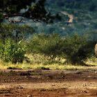 White Rhino family in Umfolozi by Cara Barron