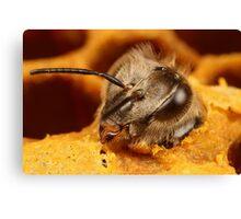 bee hatching x3 Canvas Print
