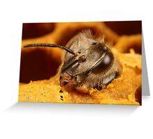 bee hatching x3 Greeting Card
