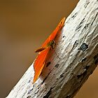 Butterfly on bark by Thomas Tolkien