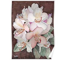 Stylized Rhododendron Poster