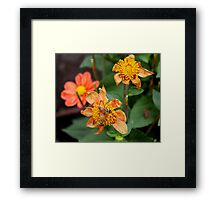 Do You Come Here Often? Framed Print