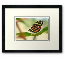 A butterfly in front of my ZOOM Framed Print