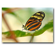 A butterfly in front of my ZOOM Photographic Print