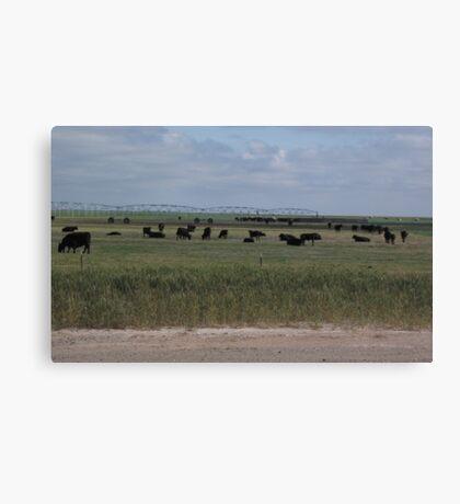 Grazing Beneath Irrigation Water Canvas Print