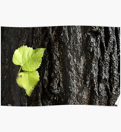 Leaves on tree Poster