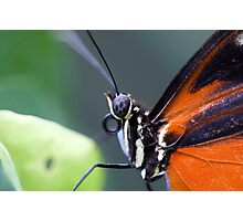 Eye eye to the butterfly Photographic Print