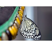 Fresh Butterfly Photographic Print