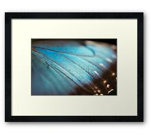 Wings of pure blue Framed Print