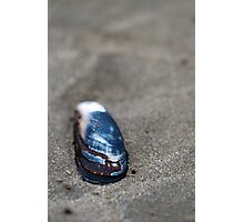 Beach and the shell Photographic Print