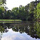 The Pond by James J. Ravenel, III