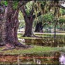 Audubon After the Rain by RayDevlin