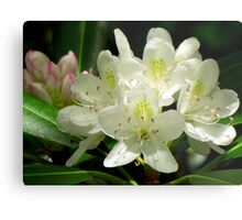 American Rhododendron Metal Print