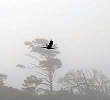 Bird flight and tree line by Darren Bailey LRPS