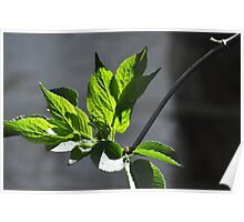 New Growth Poster