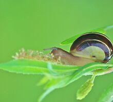 Snail Logic by Jessica Dzupina