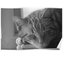 My Sleepy Cat Poster