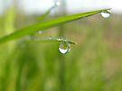 Dew on a blade of grass by rhian mountjoy
