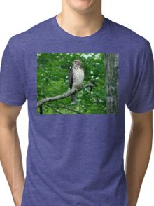 Young Red-Tailed Hawk Tri-blend T-Shirt