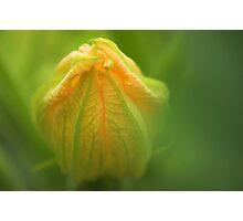 *Zucchini sunrise* Photographic Print