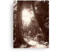 Jardim Botanico Canvas Print