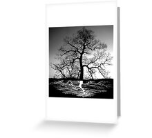 Tree Roots And Tree Greeting Card