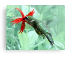 Ruby-throated Hummingbird Feeds On Fire Pink Metal Print
