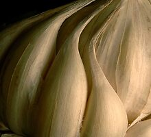 DESIGNER GARLIC by RakeshSyal