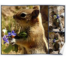 Chippy Has A Bouquet For You! Poster
