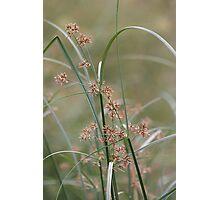 Wild flora V 5406 Photographic Print