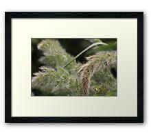 Wild flora VI 5403 Framed Print