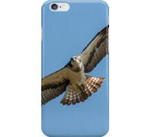 Osprey flying iPhone Case/Skin