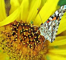 Butterfly Painting by Susan Werby