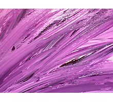 Purple Feathers Photographic Print