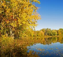 Autumn Gold by Bill McMullen