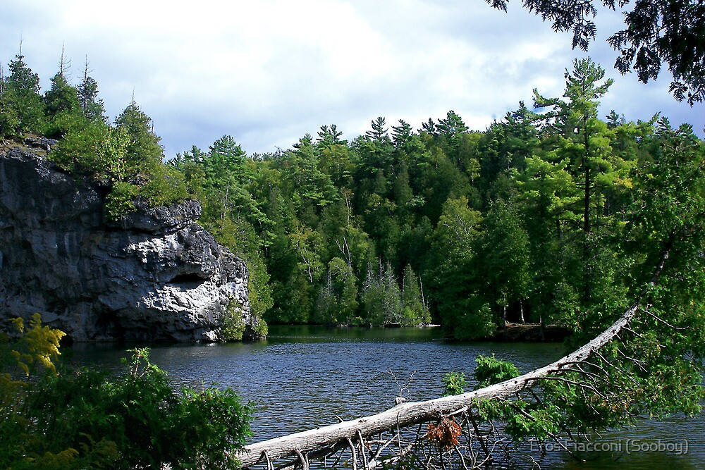 Log over lake in Rockwood Conservation Area Ontario by Eros Fiacconi (Sooboy)