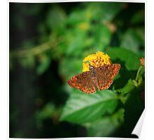 Butterfly Vignette Poster