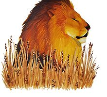 Lion in the grass by Kelly Attenborough