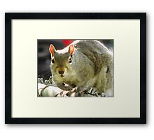 Dirty nose...who, me? Framed Print