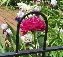 Flower in an Iron Frame by angieschlauch
