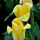 three yellow tulips all in a row by 1busymom