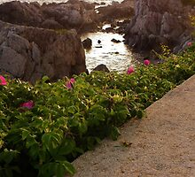 Tidal Pool and Sea Roses by quiltmaker