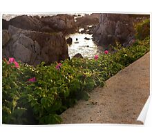 Tidal Pool and Sea Roses Poster