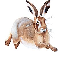 A Leaping Hare by Kelly Attenborough